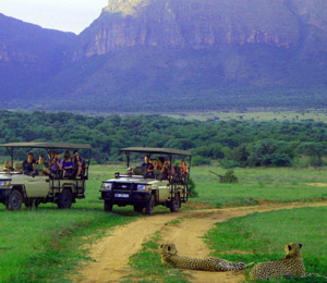 Game drives in the Waterberg
