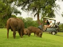 Golf cart game viewing